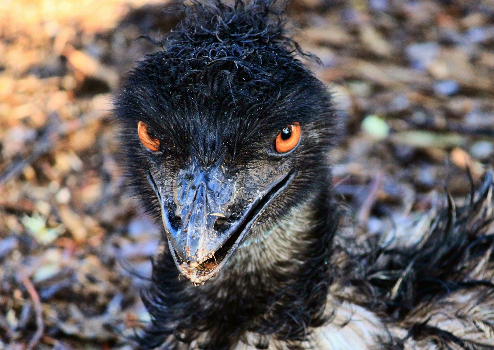 Deadliest birds