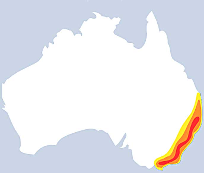 Map Of Australia Dangerous Animals.Sydney Funnel Web Spider Facts