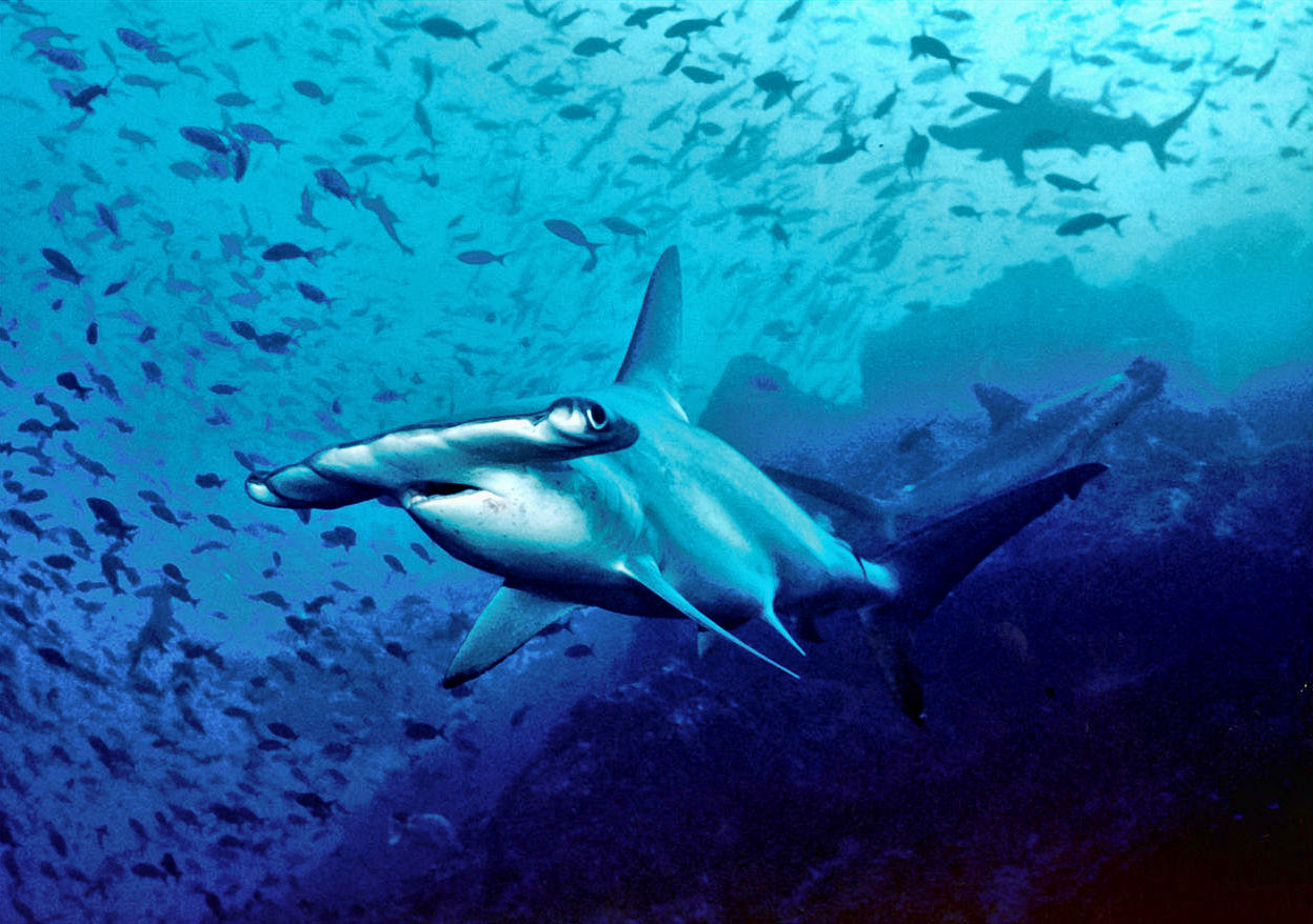Definitive Ranking of Deadliest Sharks - STEM Jobs