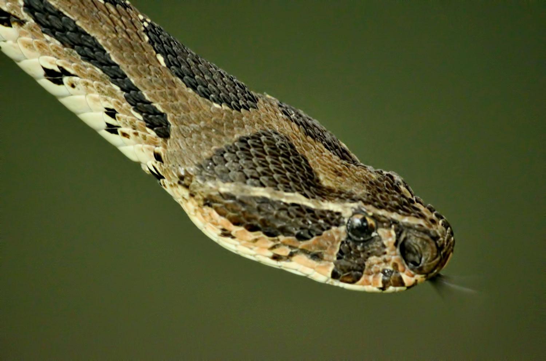 Worlds 10 Deadliest Snakes