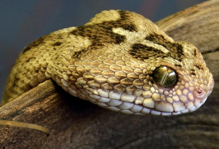 World S 10 Most Dangerous Snakes Planet Deadly
