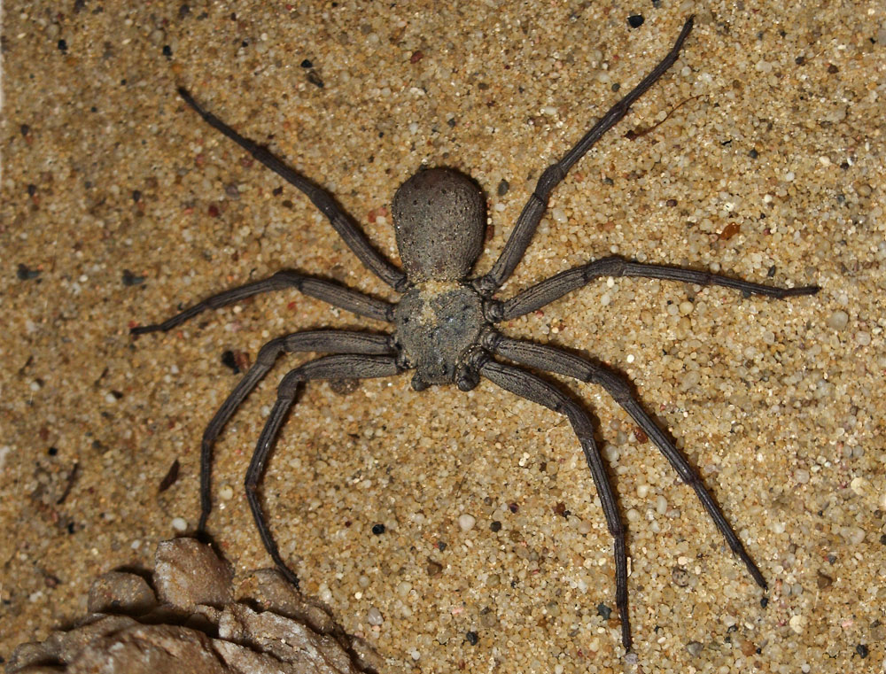 10 most dangerous spiders in the world pla  deadly