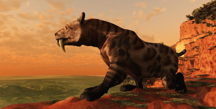 Smilodon - the biggest tiger of all time