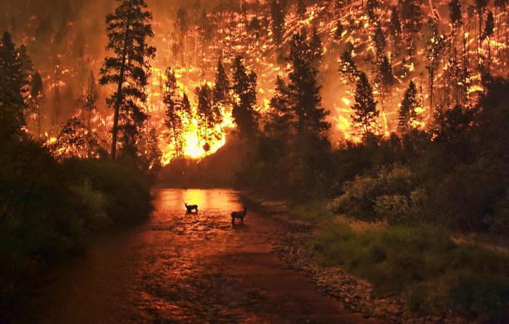 Wildfire / bushfire